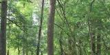 alberi_SilviaM.2.0