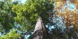 albero_SilviaM.2.0