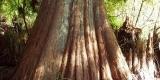 albero_SilviaM.2.1
