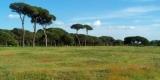 parco-san-rossore-e1291214391200