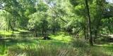 parco.naturale_Migliarino1.0
