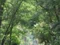 sentiero.parco_SilviaM.2.1