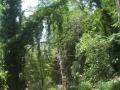 giardino.front_Ferriere2.1.0