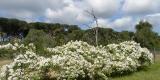 giardino_Silvia2.1